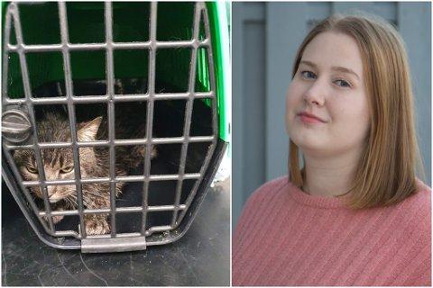 ETTERLATEN: Denne katten fann Linda Solheim i ei skråning i eit bustadfelt i Førde. Då var den hardt skadd, og klarte ikkje å bevege seg.