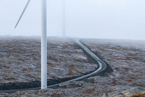 TI DAUDE: Så langt er det funne ti daude fuglar rundt dei 47 turbinane på Guleslettene.