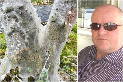 SPINDELVEV?: Fleire tre langs Jølstra nær Høgskulen i Førde har blitt pakka inn i spinn av eit slag.