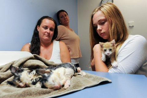 Disse kattugene ble funnet i en søppelkontainer på Lislebyav beboerne i Nellikbuen og Orkidebuen borettslag. Fra venstre er Eva Helen Haustad, bak står Maria Gatevold og Karoline Ochman har den overlevende kattungen i armene.
