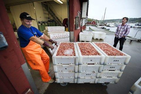 Eventyrlig rekefiske:. ¬ Øyvind Johansen er blant de mange rekefiskerne som leverer til Fjordfisk i Utgårdskilen.                                                                                                                                         Arkivfoto: Geir A. Carlsson
