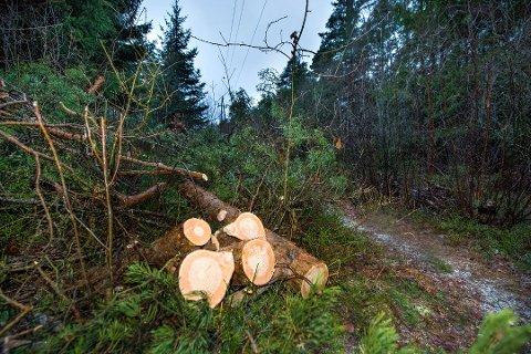 Norgesnett har mottatt mange klager etter strømbruddet på Hvaler sist uke. Det er Hafslund som må betale størstedelen av regningen.