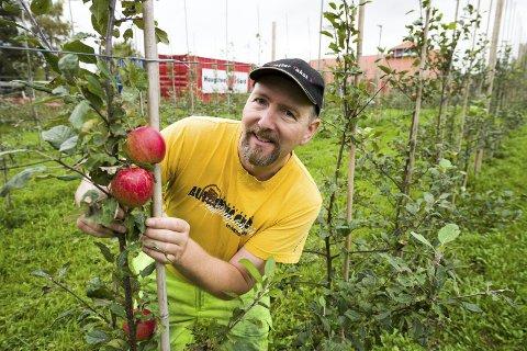 Økologisk og saftige epler: Gårdbruker Ivar Arne Grimstad på Haugsten gård produserer eplesaft fra et nyplantet felt med epletrær. Alle foto: Jan Erik Skau
