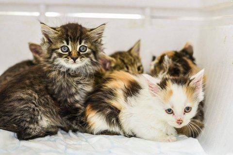 Farer: Både hunder og katter kan bli svært syke dersom de får i seg noe av det vi mennesker koser oss med i julen.
