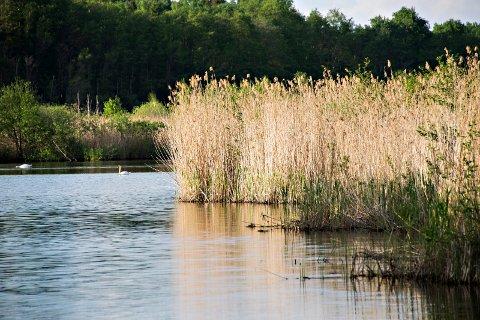 Arekilen naturreservat: Det er strid om hvor mye pukkverket vil ødelegge for dyre- og fuglelivet i Arekilen reservat, som ligger  ved siden av pukkverkstomten.