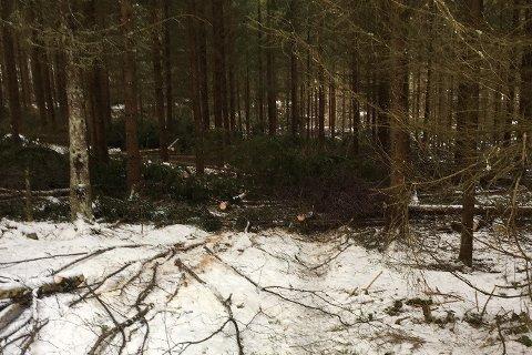 En turgåer som var ute i Onsøy på lørdag kom over denne hindringen på en sti. Nok en gang er trær hogget og plassert over turveier for å hindre ferdsel for allmennheten.