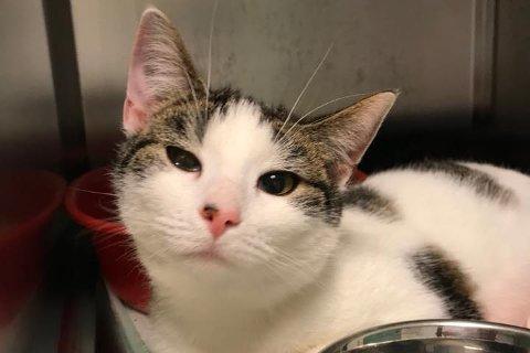 Denne katten og tre andre ble natt til torsdag funnet i et busskur på Rolvsøy. Tilfeldig forbipasserende tok med seg kattene, og fikk levert dem til Dyrebeskyttelsen.