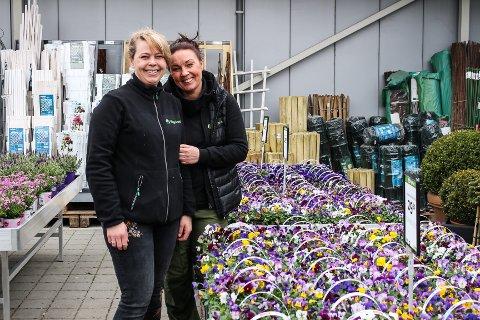 SEN VÅR: Solveig Gundersen og Hilde Stordahl hos Hageland i Fredrikstad forteller at det har gått mye stemorsblomster og påskeliljer i påska. Nå er det forhåpentligvis ikke lenge til tela er borte, og man kan plante blomster i hagen.