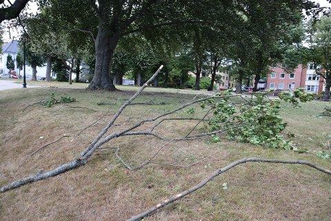 Ryddearbeid: Nedblåste grener og hele trær var noe av det brannvesenet måtte rydde opp i etter forrige storm i august. Også i dag torsdag blir det travelt på grunn av vinden.