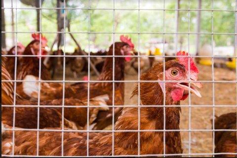 Hvaler kommune mener at hønsehuset på Kirkøy er ulovlig oppført.