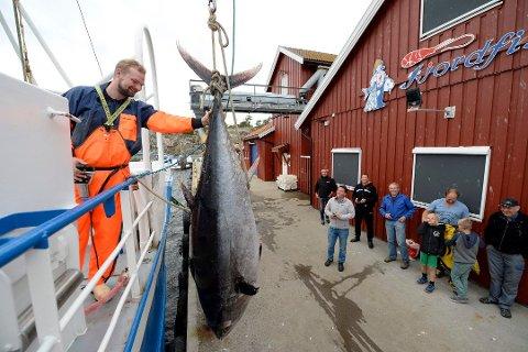 September 2016: Skipper Christoffer Svennes på «Eli R» lårer en 200 kilos tung tunfisk han fikk i trålen på brygga til Fjordfisk.