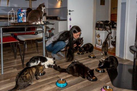 Linda Henriksen har 60 katter på 120 kvadratmeter. Her serveres kveldsmat til noen – hvor mange ser du?