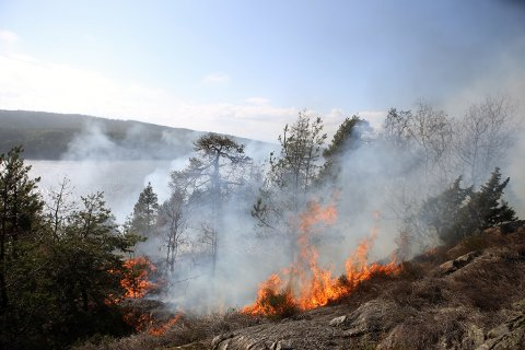 Det brøt mandag ettermiddag ut brann ved en toglinje Røysås ved Sandbukta i Østfold, og Østfoldbanen er delvis stengt. Foto: Tor Aage Hansen / NTB scanpix