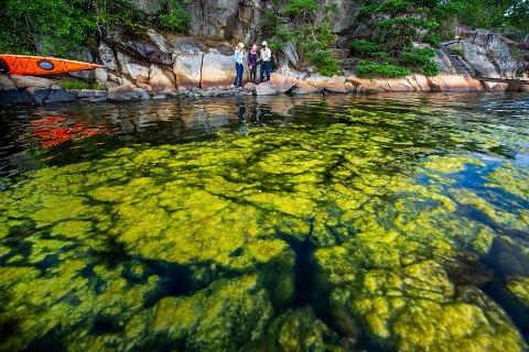 Hyttefolk forteller om en voldsom oppblomstring av noe de mener er alger i Vauerkilen. Her Bjørn Lilleeng, Ellen Lilleeng (i midten) og Christina Abildgaard.