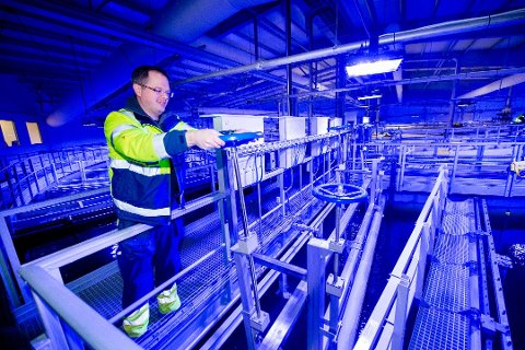 Nå er lakseproduksjonen i full gang: Bildet er tatt i vinter, da prosessingeniør Martin Gretland ved Fredrikstad Seafoods forberedte oppstart. (Arkivfoto: Erik Hagen)