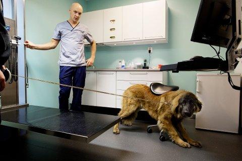 Ole Harald Johnsen ved Fredrikstad Dyrehospital opplever økt pågang av hunder som er syke med oppkast og diaré.
