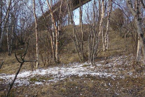 ISOPRSØPPEL: Dette bildet tok Jan Robin Bolle av isopor ved Rombaksfjorden - før han satt i gang en skikkelig ryddeaksjon.
