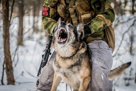 Forsvarets tjenestehunder er spesialtrente for ulike oppgaver. Hundene som skal tjenestegjøre på Evenes skal drive med vakthold og sikring av flystasjonen, de som jobber på flystasjonen, og flyene som er stasjonert på Evenes. Strenge krav til dyrehold i Forsvaret gjør at prisen på «mannskapsmessa» til hundene også får en spesialpris.