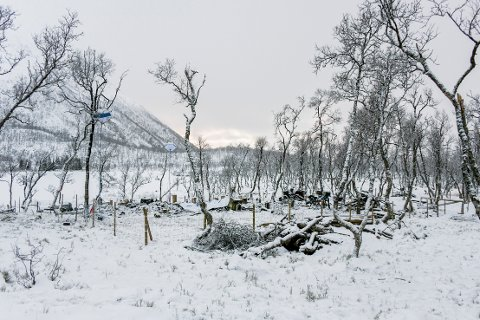 Fem personer mistet livet i den tragiske hyttebrannen på Risøyhamn i Andøy kommune, natt til lørdag 16. januar. Foto: Jens André Mehammer Birkeland / NTB