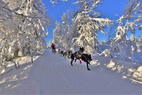DRØMMEFORHOLD: Nok snø og flotte løyper til tross - Hege Ingebrigtsen får ikke kjøre konkurranse på Hamar.
