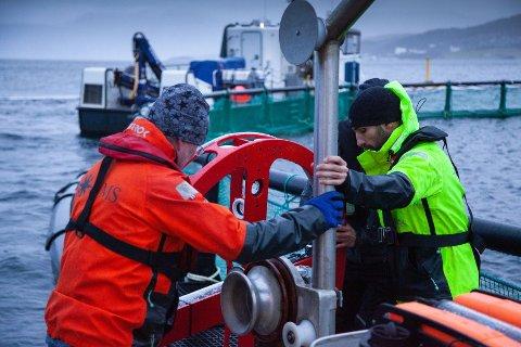 SKAL FINNE HULL: NORMS, Probotic og Ballangen Sjøfarm AS har testet ut flere forskjellige versjoner av notvaskeren som nå også skal detektere hull og slitasje på noten autonomt og øke rømningssikkerheten.
