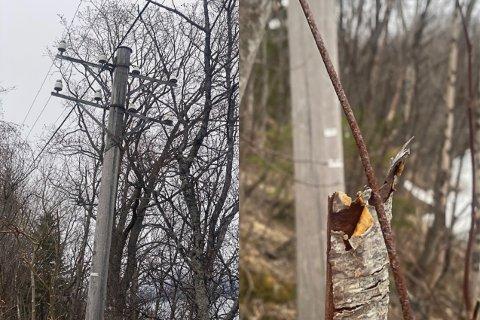 TELEFONLINJE: Deler av den gamle telefonlinja står fremdeles. Flere er bekymret for at kobbertrådene som henger ned fra disse skal skade dyr.