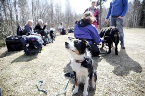 AVVENTER: Mens Norsk Kennel Klub og Veterinærinstituttet anbefaler å avlyse alle planlagte hundeutstillinger og -stevner, avventer Horten Hundeklubb å ta en avgjørelse om et planlagt arrangement i helgen. (Bildet er tatt ved Horten Hundeklubb ved en tidligere anledning.)