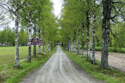 STOR STRØM, STORT BEHOV: I følge UDI vil Opaker gård fungere som et slags hotell inntil flyktningene får plass ved transittmottak. FOTO: ANITA KROK