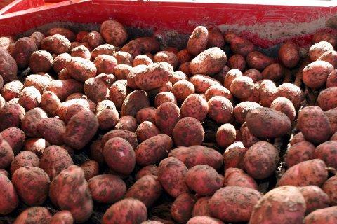 UNDERSLAG: En lokal grønnsaks-og potetbonde er nå tiltalt for medvirkning til underslag hos Gartnerhallen. Bonden er slått konkurs, og skal i følge tiltalen ha fått overført over 45 millioner kroner.