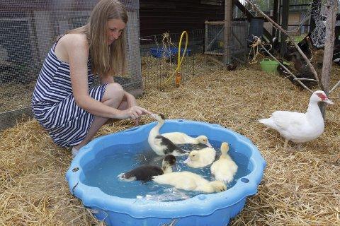 MORGENBAD: Mona sørger for at andungene får morgenbadet, og snart kan Sisi Vanilla ta de seks små med ut i det lille tjernet.