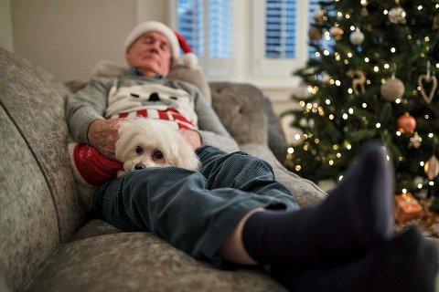 Du bør være forsiktig med hva du gir hunden din i jula, hvis ikke kan dyrlegeregningene fort bli store.