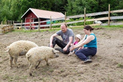 IDYLL: Martin Hagen Johnsen og samboer Anne Hårstad er fra Trøndelag.  De leide gård i Nord-Odal for to år siden for å kunne drive med ullgriser. Dattera Mist får også lov til å hilse på grisene.