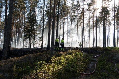 FULL UTRYKNING: Brannmannskapene fikk først beskjed om en grasbrann, men slo full alarm da det ble klart at et større område var antent. Heldigvis fikk de  raskt kontroll over skogbrannen i området mellom Hesbølsjøen og riksvei 2, like nordvest for Skotterud sentrum  FOTO: PER HÅKON PETTERSEN