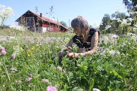 Gunhild Ullerud sørger for å stimulere markblomstene og hindre lupiner og hundekjeks å få overtaket. Samferdselsavdelingen i fylkeskommunen revurderer sin skjøtsel og vil velge ut verdifulle strekninger.
