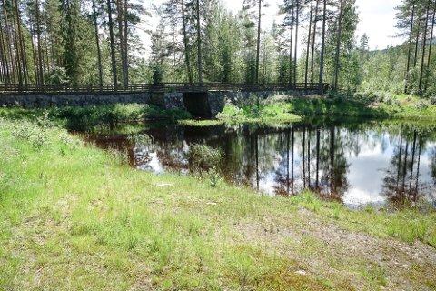 DETTE OMRÅDET: Det er i et vel 660 dekar stort område rundt od dette tjernet, Kverntjernet, som det nå forberedes et stort hytteområde på Åsnes Finnskog.
