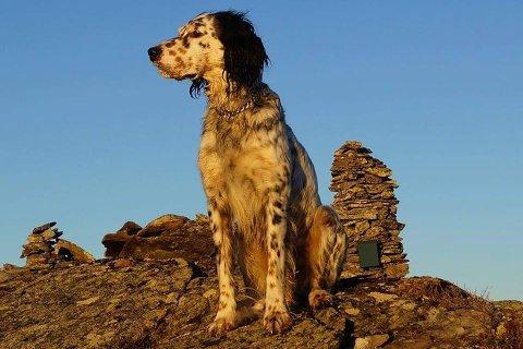 Hunden XO har forsvunnet ved Tingberg i Øyer.