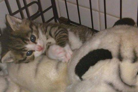 HJELPELØS: - Kattunger er helt avhengige av moren sin for å få mat og stell, sier Tone Solanki.