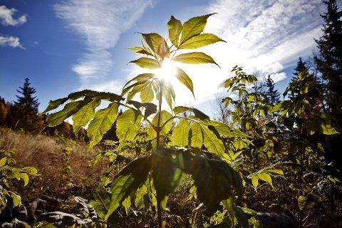 SOL: Det blir noen skikkelige fine vårdager denne langhelgen. Det er meldt sol og 20 varmegrader.  Foto: Silje Rindal