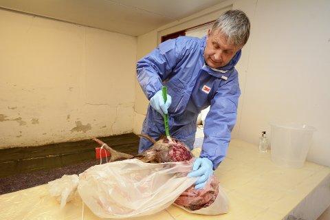 733 hjortevilt er testet uten å finne skrantesjuke i Gudbrandsdalen, forteller Knut Romsås Breden fra Mattilsynet.
