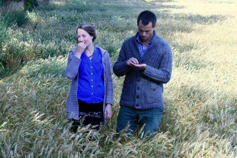 GARDBRUKERE OG PSYKOLOGER: Marthe og Jardar Røhr-Godø dyrker quinoa. Her i hveteåkeren.Foto: Privat