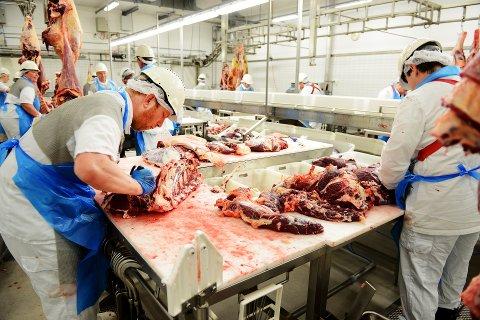 ANSVAR: Slakteriet har ansvar for å innhente nødvendig informasjon om dyrene som skal slaktes. Arkivfoto