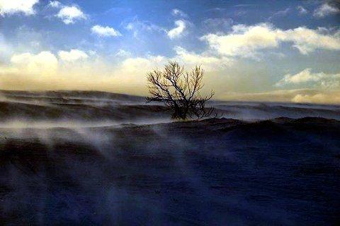 3. BLÅST: Vindfullt på Venabygdsfjellet. Foto: Katrine Dalbak