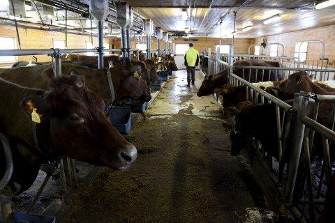 DYREVELFERD: Samtidig med oppbyggingen av  dyrepolitiet, strupes Mattilsynet.