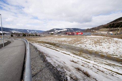 HEKKEPLASS: Den utrydningstrua fuglen vipa bruker Storhove sør som hekkeplass. Det kan påvirke både næringsutbygging og ny E6. Nå ligger ballen hos politikerne i Lillehammer kommune.