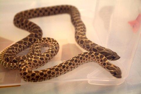 Mannen ønsket å ta imot slanger som er beslaglagt - slik tilfellet er med disse to slangene.