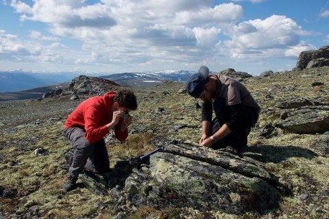 Oppsiktsvekkende: Feltundersøkelsene ved Storhorrungen på Dalsida viser at noen av steinprøvene kan være opptil 610 millioner år gamle. Fordi berggrunnen er så gammel finnes det derfor ikke rester av fossilt liv Foto: UiO/Johannes Jakob