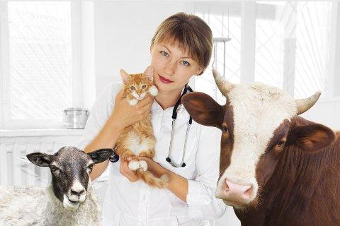 - Eierne av både «Mons» og «Dagros» forventer et optimalt akuttilbud i lys av tilgjengelig veterinær kompetanse, med akseptabel responstid, skriver veterinær Ketil Løland Jacobsen.