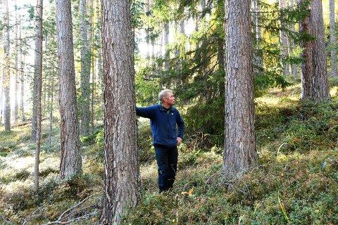 Nei: En skogeier i Sel mener viktige verneverdier best ivaretas gjennom tradisjonell skogsdrift og – skjøtsel.
