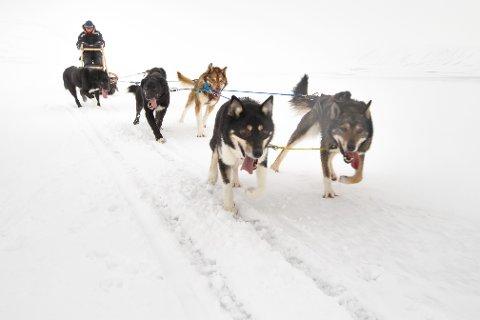 Den snørike vintersesongen har vært gull for hundekjøring. Foto: Heiko Junge / NTB scanpix