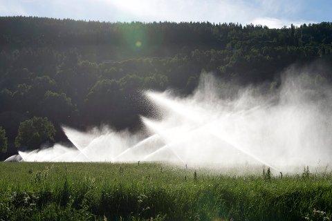 Bøndene må ty til vanning på grunn av manglende nedbør. Nå setter Gudbrandsdal Energi ned prisen på strømsalg til vanningsanlegg og tilbyr en egen spotprisavtale for bønder.